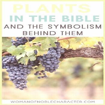 The Incredibly Interesting Symbolism Of Plants In The Bible The symbolism of plants in the Bible. A
